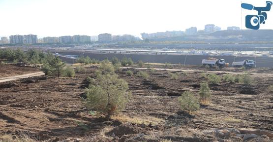 Çiftçi, GAP 2, GAP 3 ve Halil-Ür Rahman Şehir Ormanı alanında incelemelerde bulundu.
