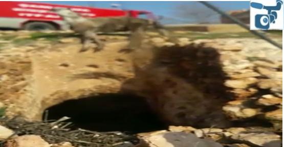 Urfa'da Mağara Çukuruna Düşen At Kurtarıldı