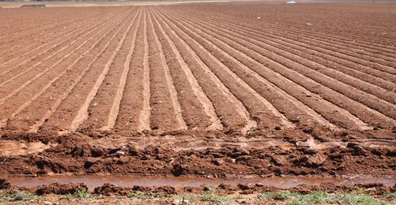 Harran'da pamuk ekim hazırlıkları başladı