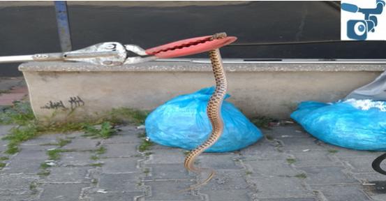 İtfaiye ekiplerinden yılan operasyonu