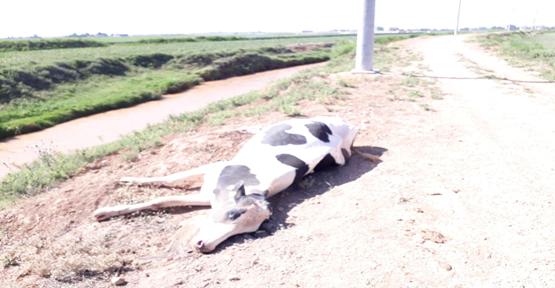 Kimyasal İlaçlar Hayvanların Ölümüne Yol Açtığı İddia Edildi