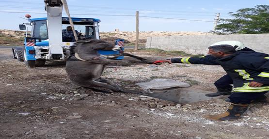 Harran'da Eşek Foseptik Çukuruna Düştü