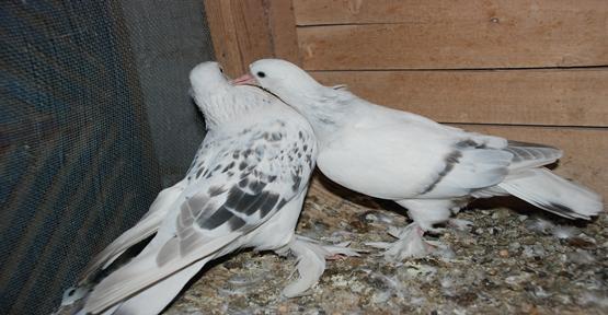 Pazarda Kuşlar Renkli Görüntüler Oluşturuyor