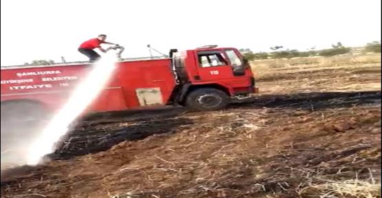 Şanlıurfa'da 20 Dönümlük Ekili Arazi Kül Oldu