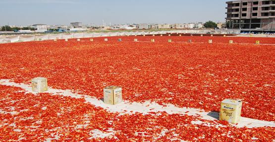 Urfa'da Açılan Büyük Sergilerde İsot Temizleniyor