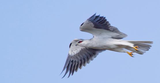 Urfa Kuş Türleri Bakımından Çok Zengin