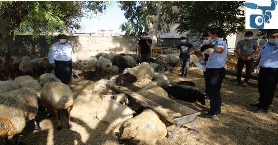 Haliliye'de Bayram Öncesi Tedbirler Hat Safhada