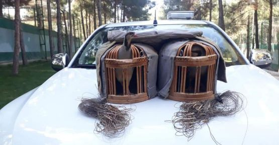 Şanlıurfa'da Kaçak avcılar suçüstü yakalandı