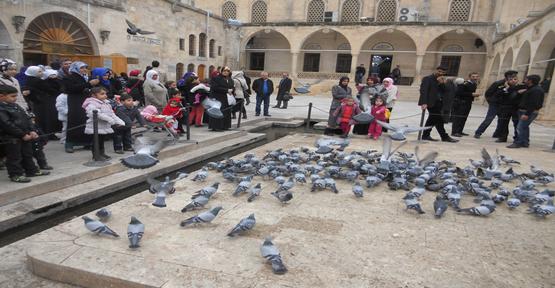 Dergah cami avlusundaki bulunan kuşlara yoğun ilgi