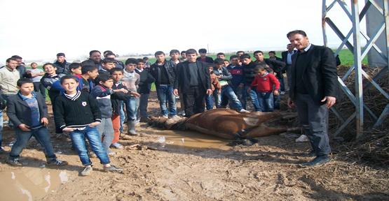 Elektrik akımına kapılan at öldü