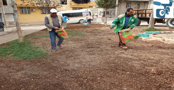 Haliliye Belediyesinden  Bahar Çalışması