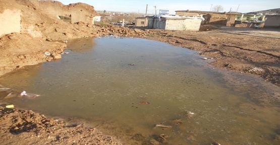 Harran'da Soğuk Hava ve Don
