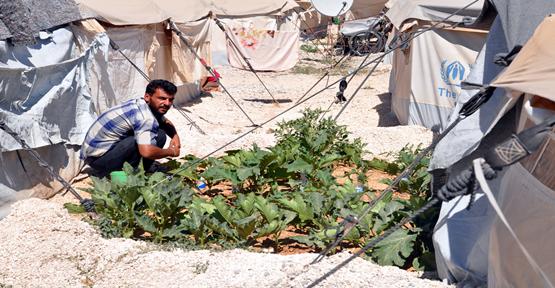 Mülteci Çadır Arasında Sebze Yetiştiriyor