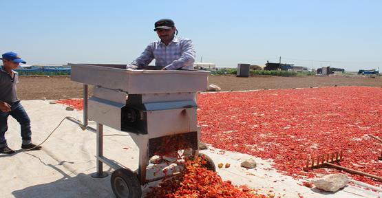 Şanlıurfa'da isot üretimi sezonu başladı