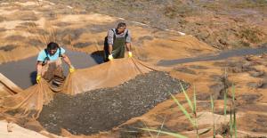 10 Milyon Yavru Balık Barajı Bırakıldı