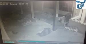 Urfa'da Cep Telefon Hırsızlığı Güvenlik Kamerasına Yansıdı