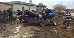 Urfa'da Bataklığa Saplanan Atı İtfaiye Kurtardı
