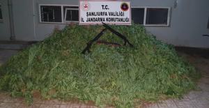 Şanlıurfa'da 4 Kilo 450 Gram Esrar Ele Geçirildi