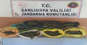 Şanlıurfa'da Uyuşturucu Operasyonu, 2 Tutuklama