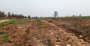 Şanlıurfa'da Yanan ormanlık alanlar Yeniden Yeşeriyor