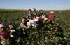 Pamuk ve mısır işçilik ücretleri açıklandı