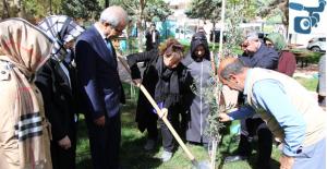 Şanlıurfalı Arfin Şehidin İsminin Verildiği Park Zeytin Fidanı Dikildi