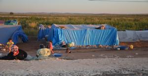 Tarım İşçileri, Pamuk Tarla Kenarlarında Çadırlarını Kurdu