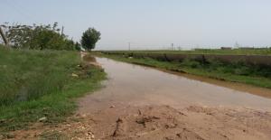 Urfa'da Bilinçsiz Sulama Devam Ediyor