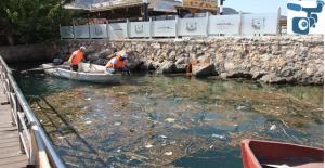 Halfeti'de Fırat Nehri Temizleniyor