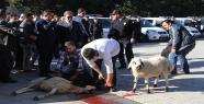 Müdür Pınarbaşı; Polisler İçin Kurban...
