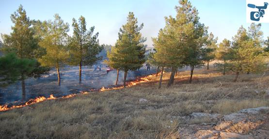 Toki Ormanında Yangın