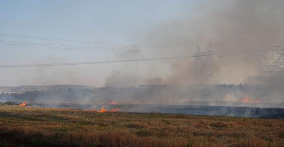 Urfa'da 8 dönüm tarla yandı