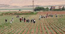 Urfa'da ekmek parası için ter döküyorlar