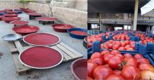 Urfa'da Salça Telaşı