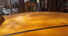 Kent merkezini sivrisinekler bastı