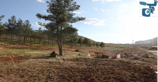Yenice'ye mesire alanı yapılıyor