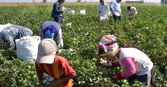 Tarım işçilerine aşı müjdesi