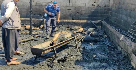 Urfa'da çıkan yangın 25 hayvanı telef etti!