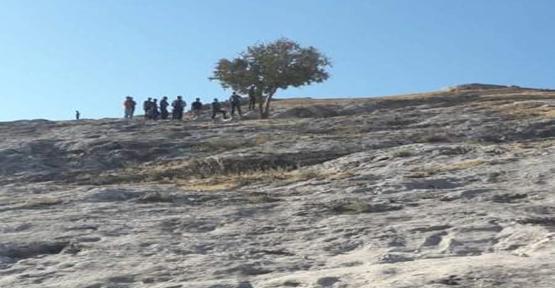 Eyyübiye'de ağaca asılı halde bulundu!