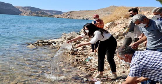 Halfeti'de 75 bin Şabut balığı yavrusu gölete bırakıldı