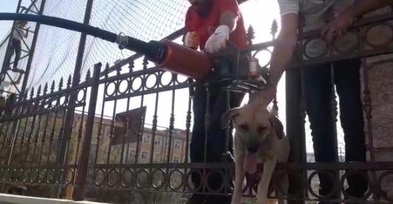 Eyyübiye'de başı demir kapıya sıkışan köpeği itfaiye kurtardı