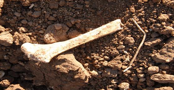 İnşaatta buluna kemikleri İnceleniyor