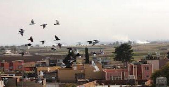 Rasulayn'da PYD ile El Nusra Arasında Büyük Çatışma