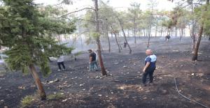 Şanlıurfa'da iki farklı noktada yangın