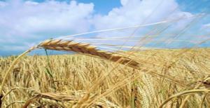 Çiftçilere Ödeme Müjdesi