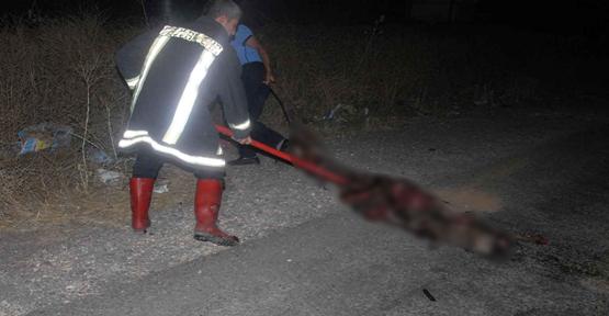 Yola Çıkan Eşek Kazaya Neden Oldu 1 Kişi Yaralandı